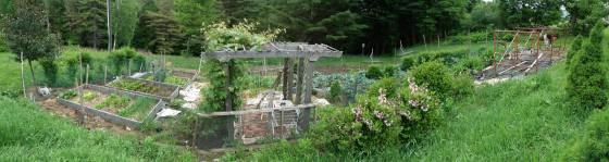 A panorama of the vegetable garden. Greens, cabbage, broccoli, cilantro, peas, tomatoes, tomatillos, peppers, eggplant, carrots, beets, swiss chard, leeks, shallots, pumpkin, zucchini, and today--5 kinds of beans!