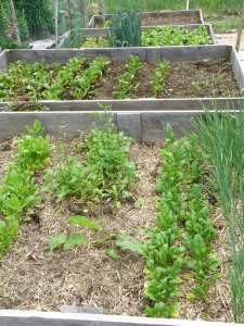 The raised beds.